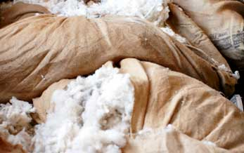 Photo of Bags of Raw Wool